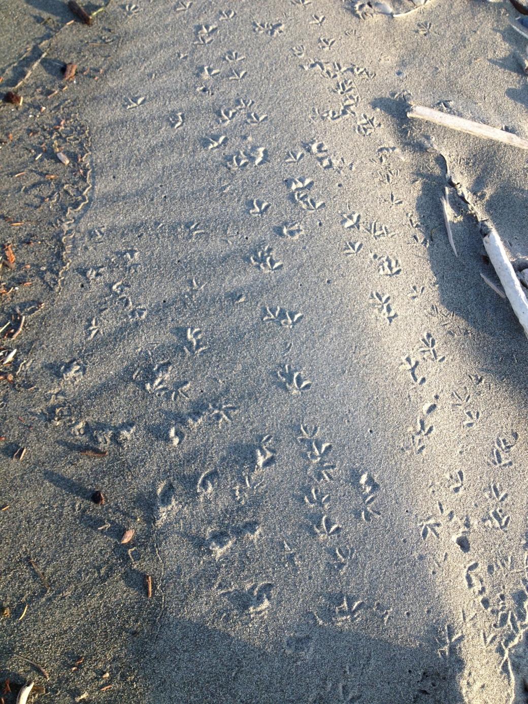 Bird tracks on the Spit