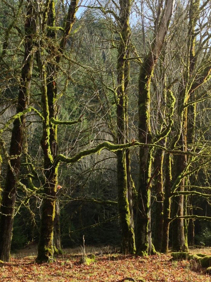 Forest near Madison Falls