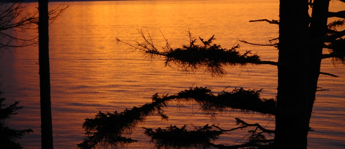 Tree Silhouettes at Sunset - Dungeness National Wildlife Refuge