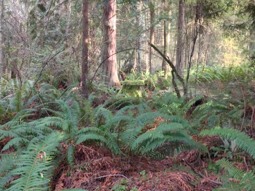 A Woodbow! - Dungeness National Wildlife Refuge, Sequim, WA