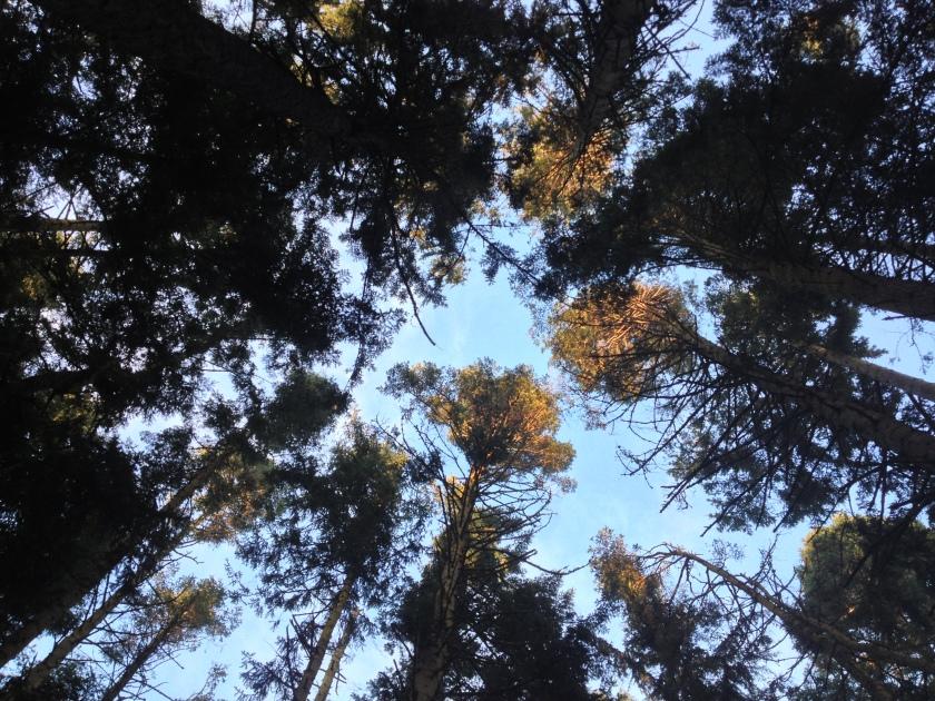 Tall Trees - Dungeness National Wildlife Refuge, Sequim, WA