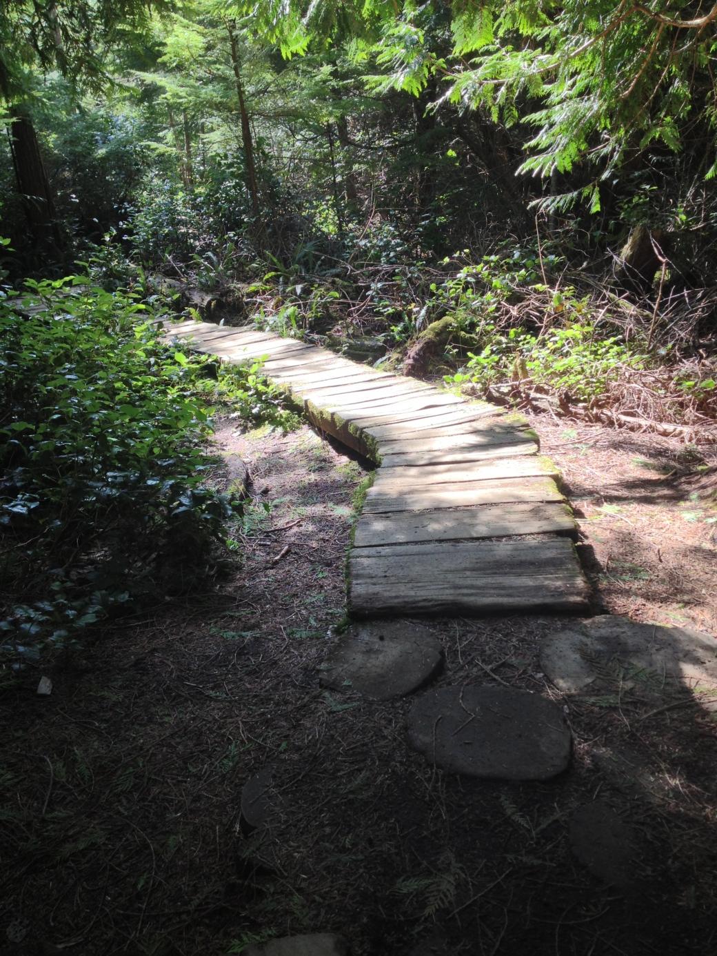 Boardwalk on trail - Cape Flattery trail, Neah Bay, WA