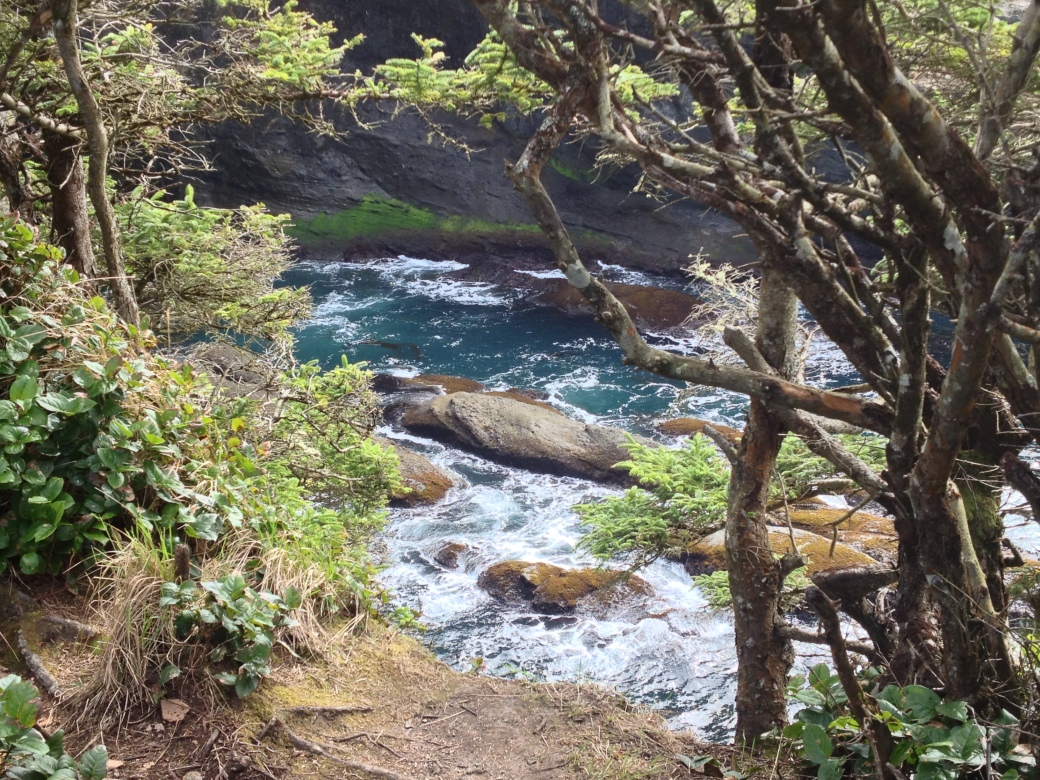 View from one of the overlooks on the trail looking southeast - Cape Flattery trail, Neah Bay, WA