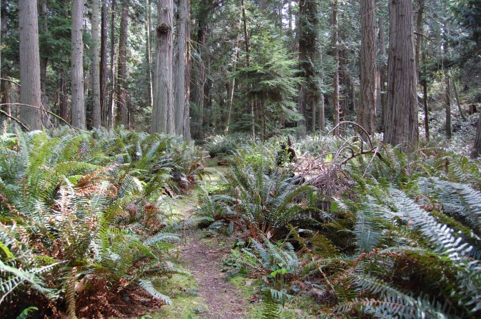 Trail on Matia Island - San Juan Islands, NWR, Washington