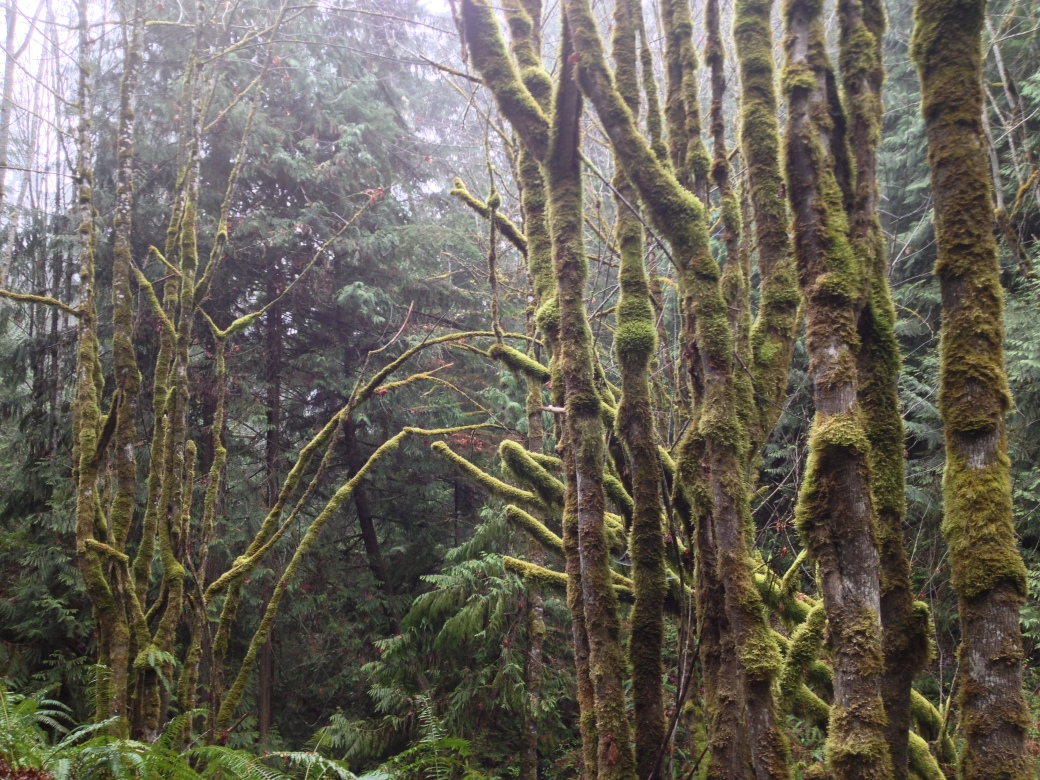 Some of the Forest