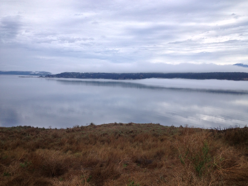 View of the Olympics from Protection Island National Wildlife Refuge - Sequim, WA