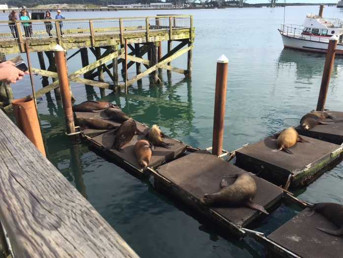 Seal Docks - Newport, OR